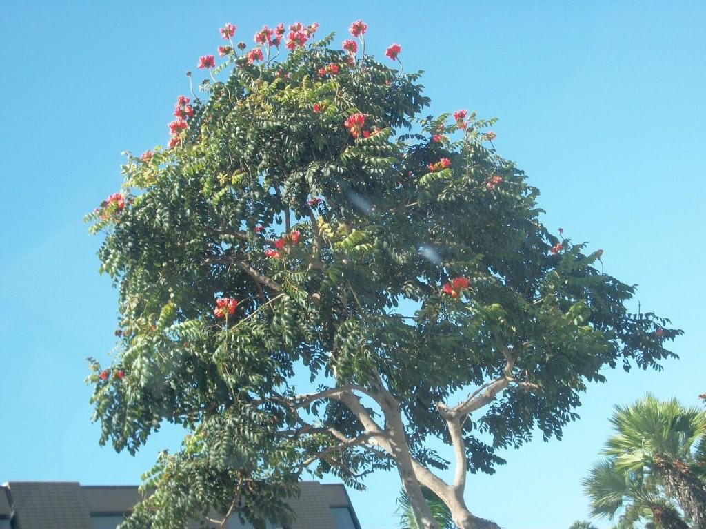 BM tree